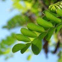 leaf-1780101_640